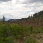 pohľad dole dolinou od mostíka cez Kôprovský potok